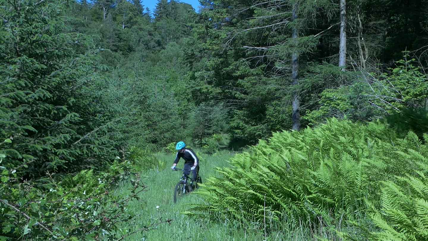 Cycling through ferns and bracken in a woodland clearing